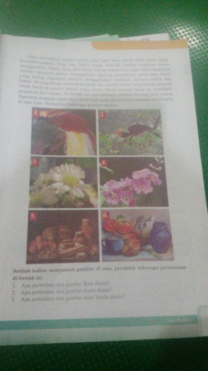 1 Apa Perbedaan 2 Gambar Flora Diatas 2 Apa Perbedaan 2 Gambar Fauna Diatas 3 Apa Perbedaan 2 Brainly Co Id