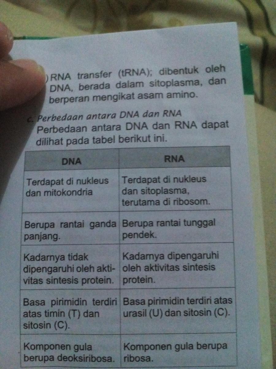 Apa Perbedaan Dna Dan Rna Brainly - DNA Informasi
