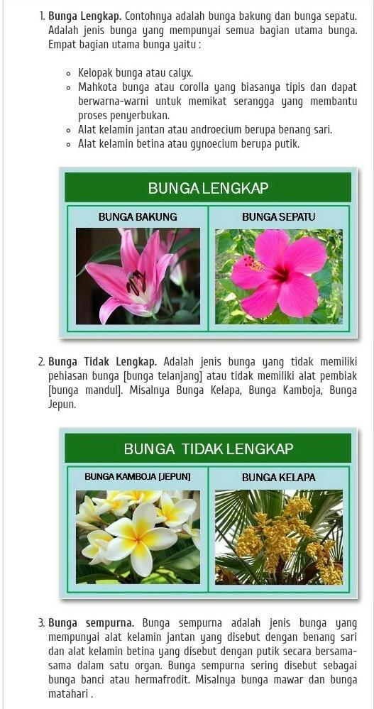 Gambarkan 10 Jenis Bunga Lengkap Dgn Fungsinya Brainly Co Id