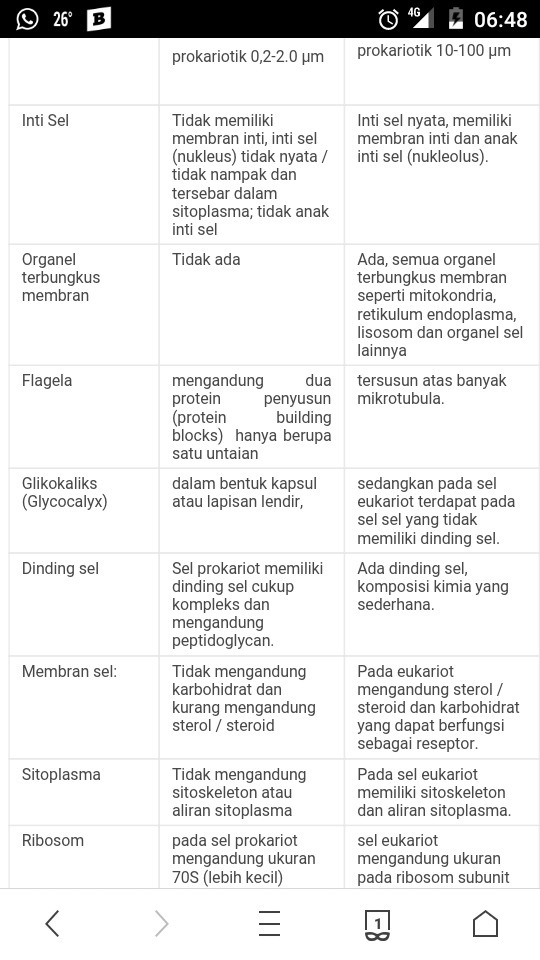 Perbedaan Struktur Sel Prokariotik Dengan Eukariotik
