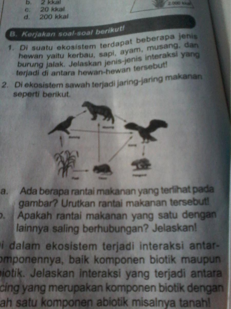 Contoh Gambar Ilustrasi Ekosistem Sawah   Iluszi