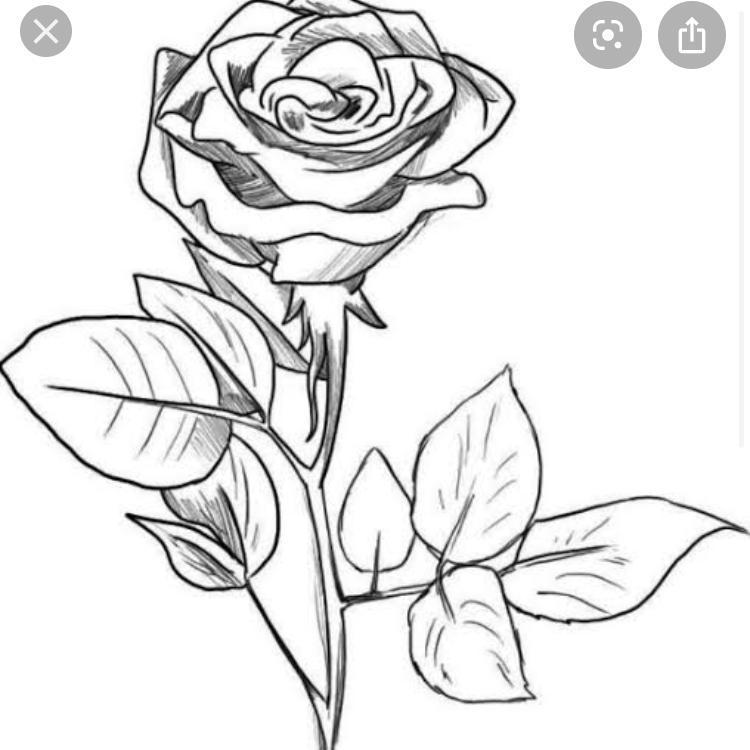 Tolong Bantuin Bikin Alasan Ya Alasannya Knp Memilih Gambar Bunga Mawar Brainly Co Id
