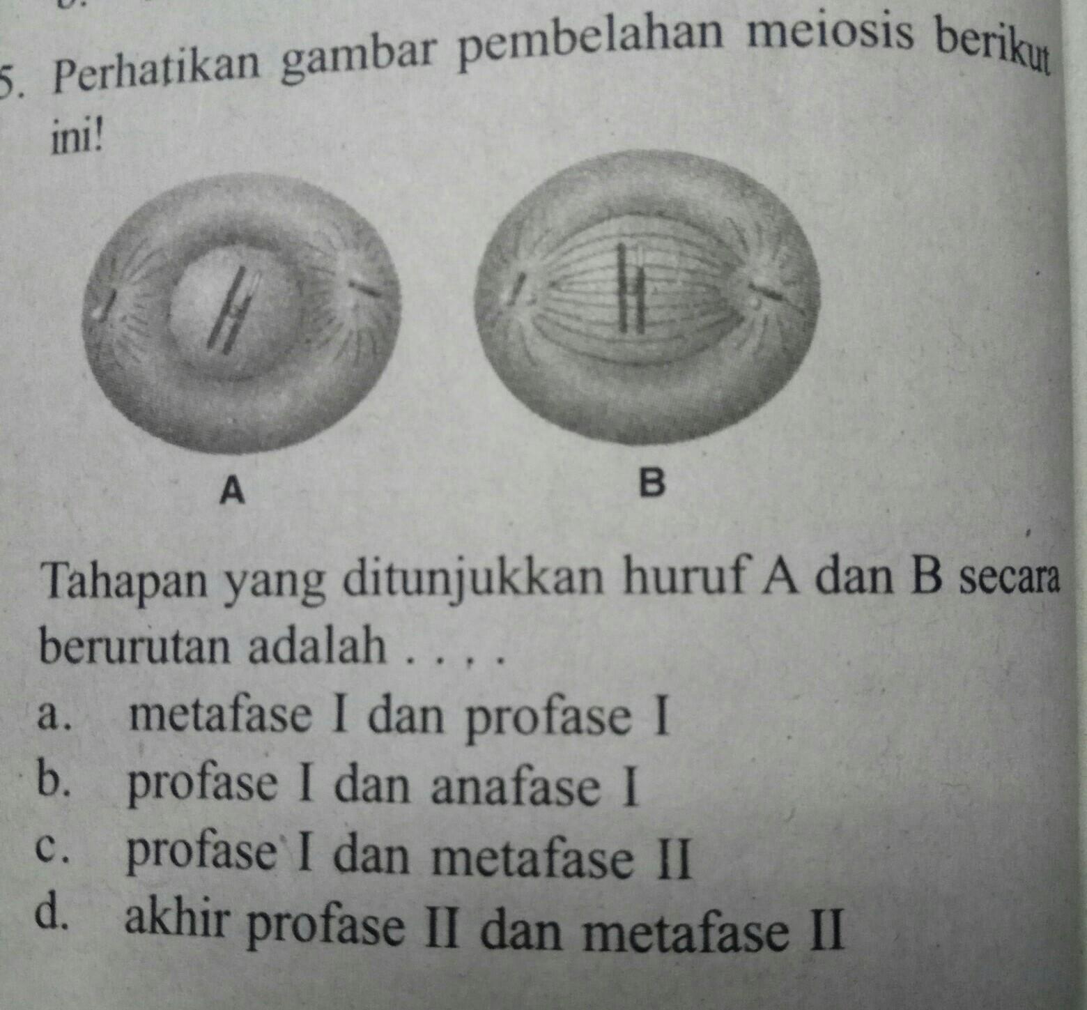 Tahapan Yang Ditunjukkan Huruf A Dan B Secara Berurutan Adalah A Metafase 1 Dan Profase Brainly Co Id