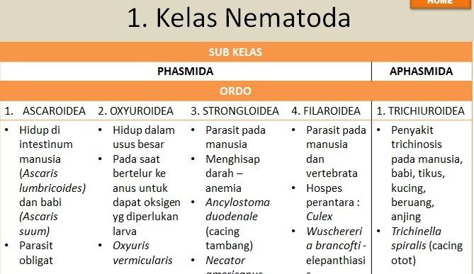 klassifikasi nemathelminthes nematoda)