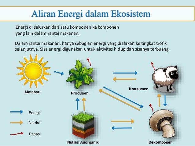 Aliran Energi Dalam Ekosistem Beserta Gambarnya Brainly Co Id