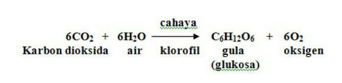 Tuliskan Reaksi Fotosintesis Syarat Terjadi Fotosintesis Dan Hasil Fotosintesis Brainly Co Id