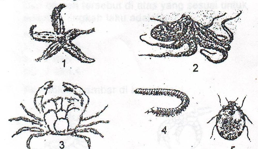 Gambar Dan Jelaskan Bagian Bagian Pada Hewan Avertebrata Dan