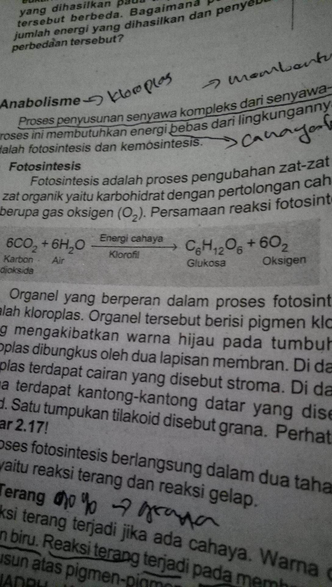 Persamaan Reaksi Kimia Pada Proses Fotosintesis Yang Terjadi Di Daun Banjarbaru