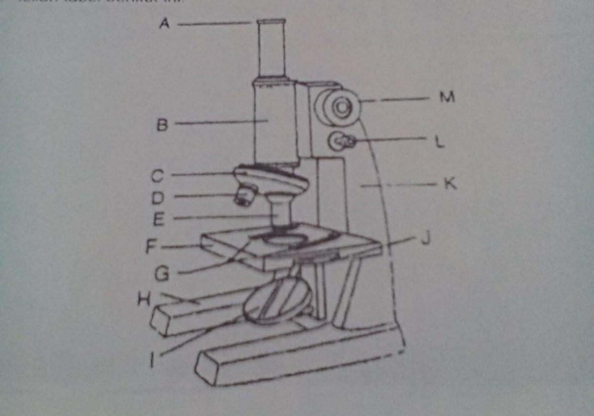 Nama bagian mikroskop a m adalah brainly id