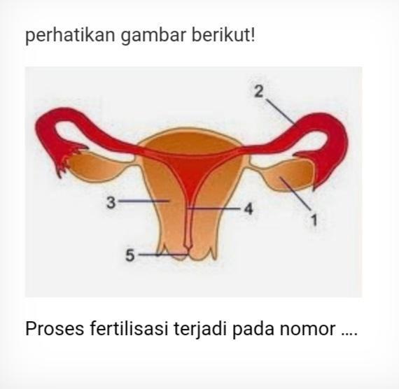 Proses Fertilisasi Terjadi Pada Nomor Brainly Co Id