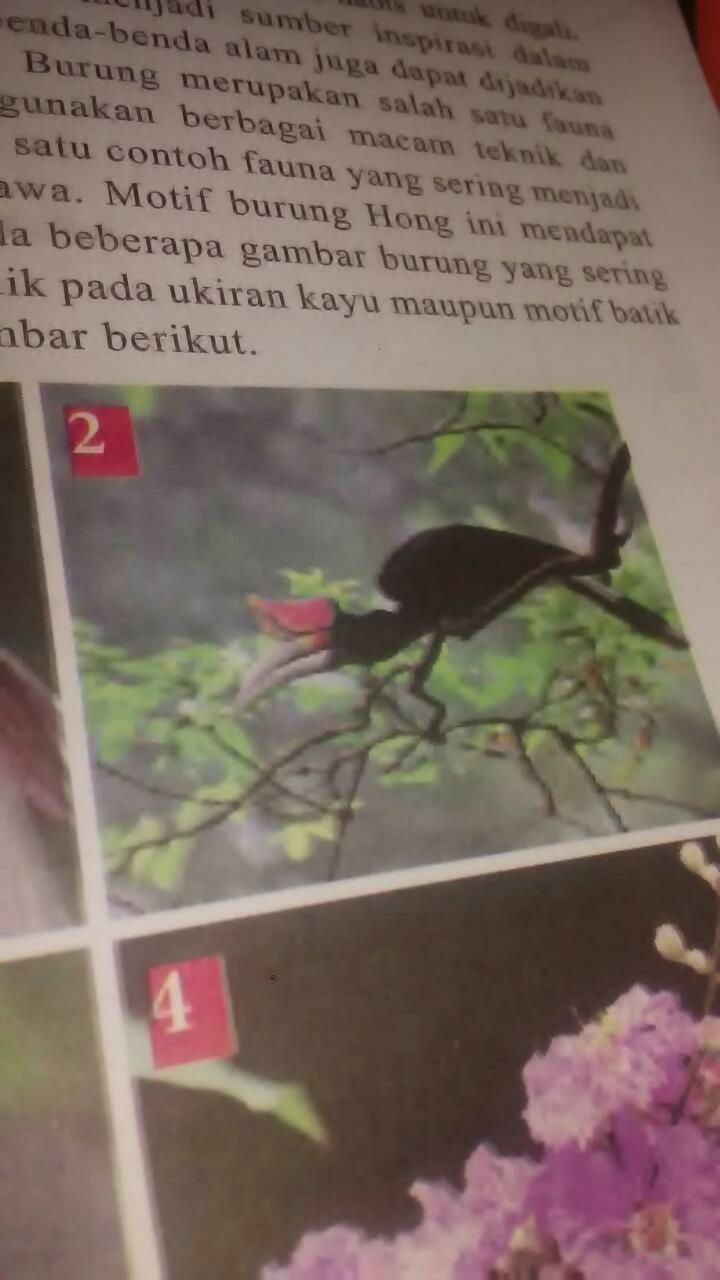 Ini Namanya Burung Apa Brainly Co Id
