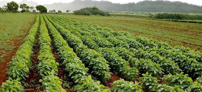 Berdasarkan Gambar Dibawah Jelaskan Kegiatan Pertanian Yang Cocok