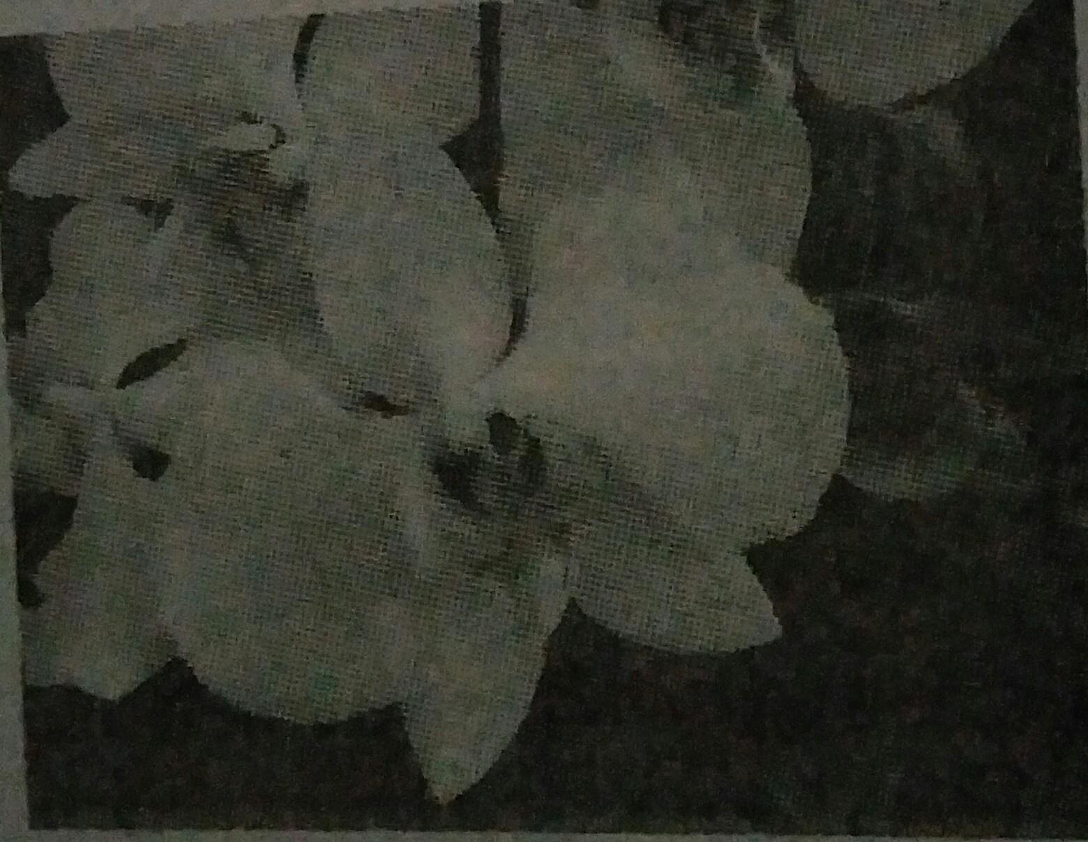 Perhatikan gambar tumbuhan di bawah ini Berdasarkan gambar ...