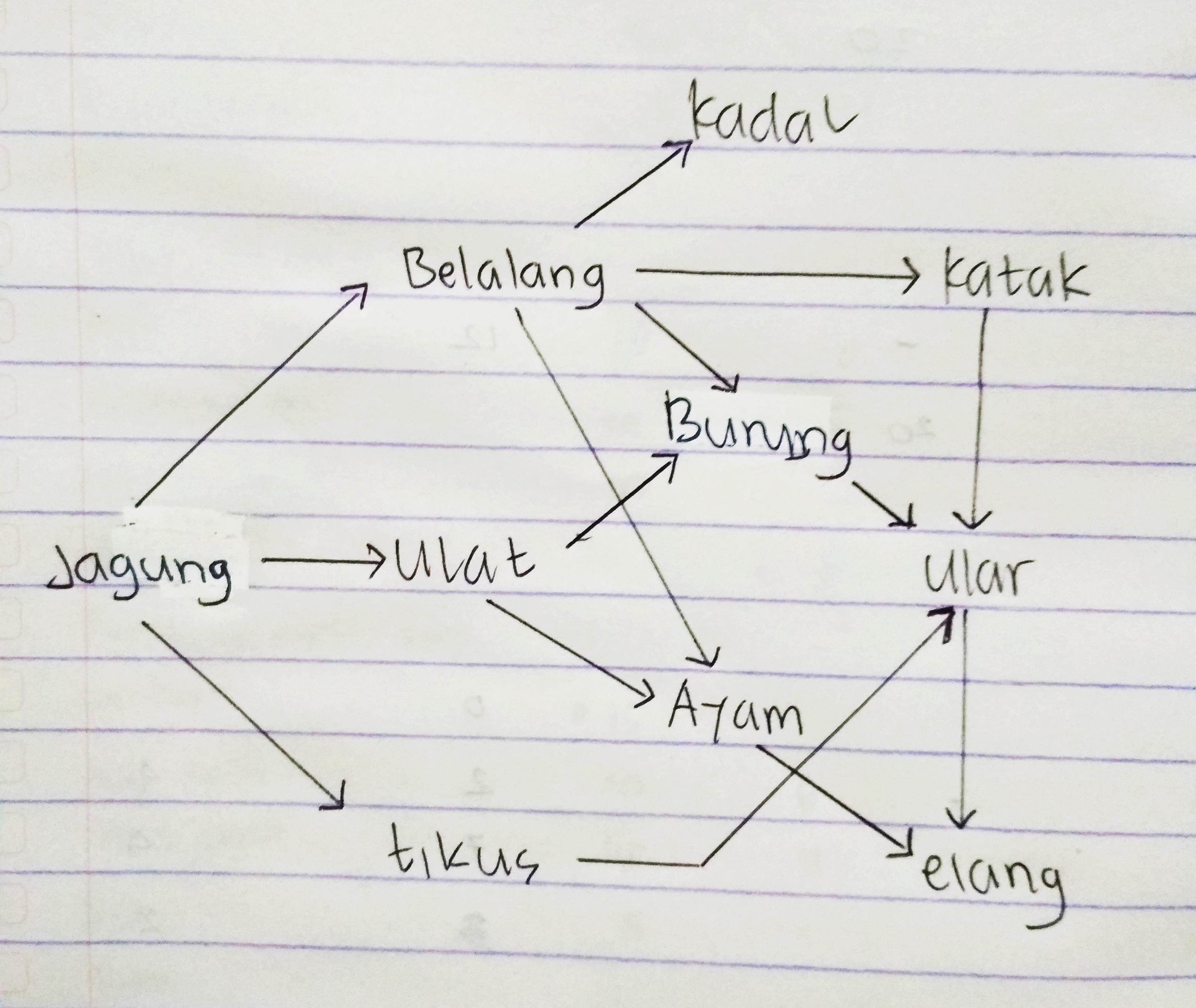 buatlah diagram jaring-jaring makanan berdasarkan makhluk ...