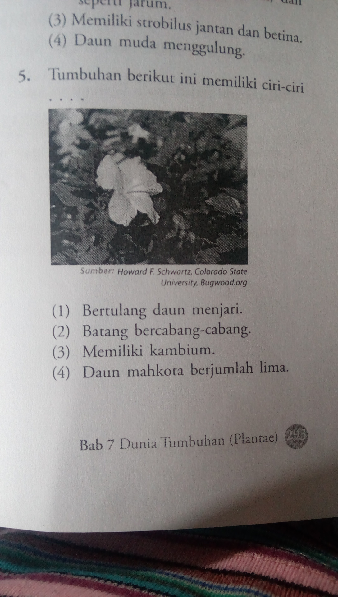 Tumbuhan berikut ini memiliki ciri-ciri - Brainly.co.id