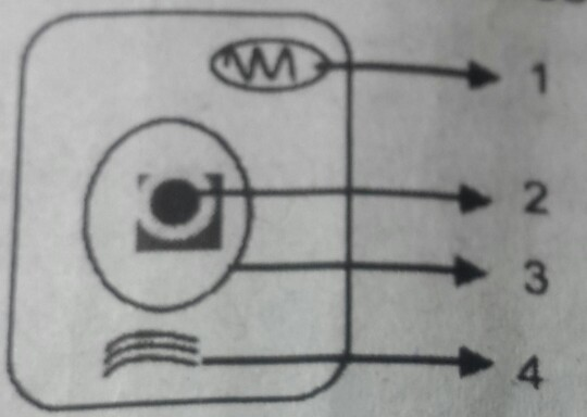 Perhatikan gambar sel berikut! Bagian sel yang ditunjukkan ...