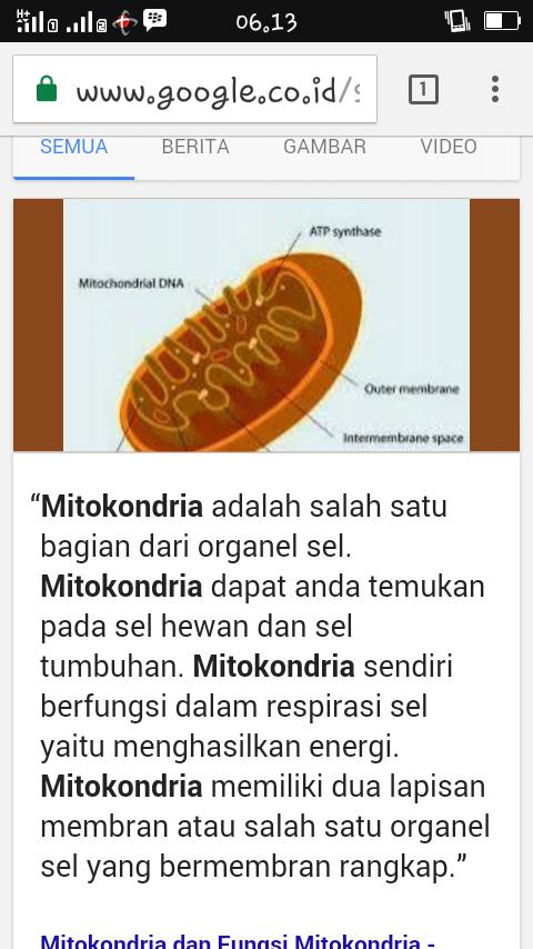 Apa Itu Mitokondria Brainly Co Id