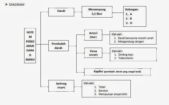 Gimana Sih Diagram Klasifikasi Tentang Sistem Peredaran