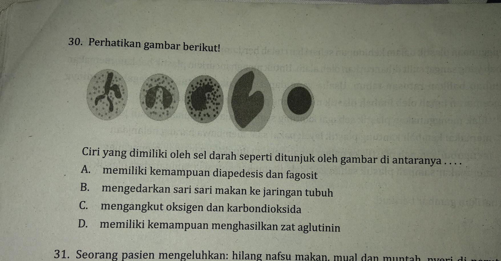 ciri yang dimiliki oleh sel darah seperti ditunjuk oleh ...