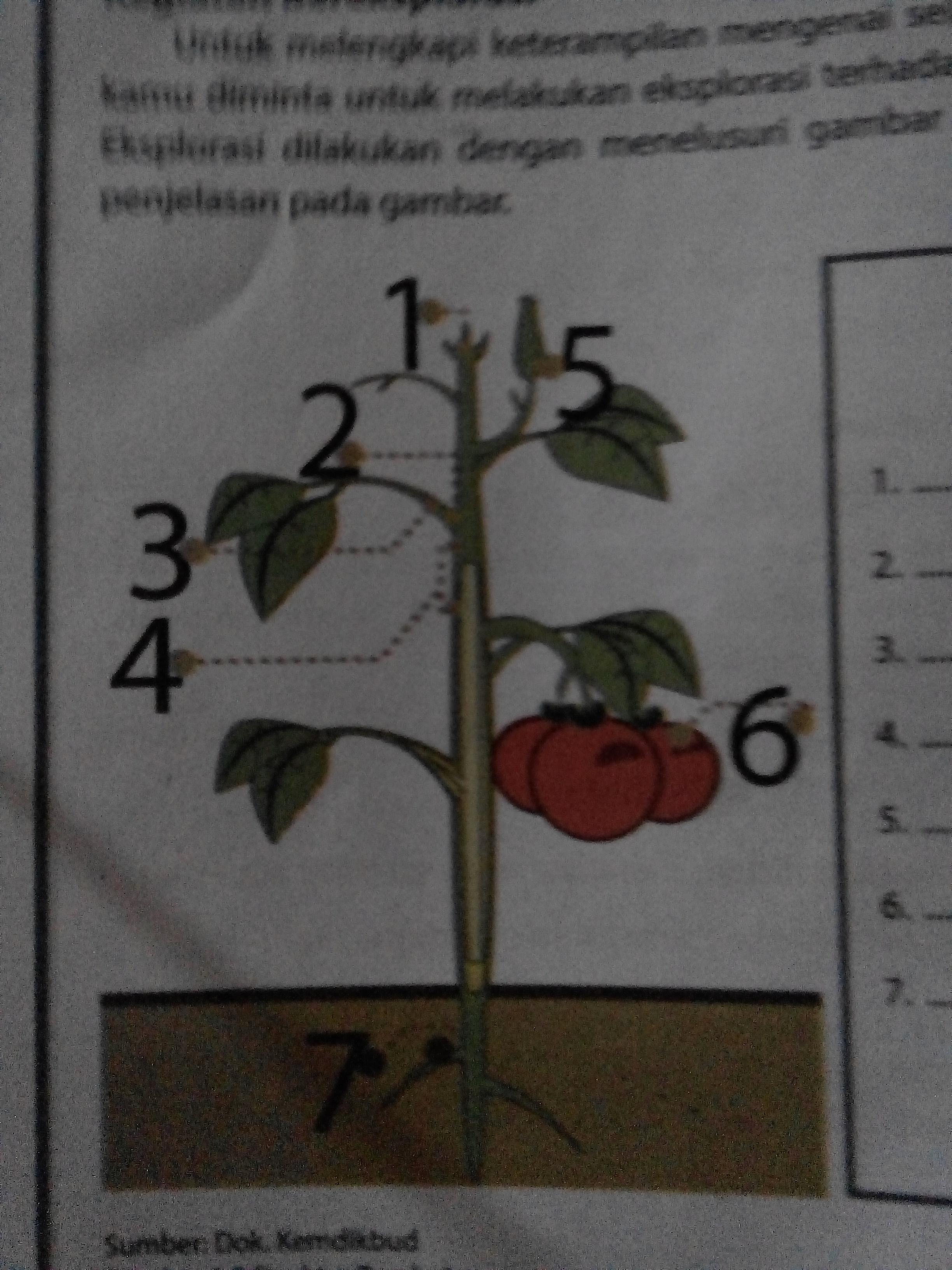 75 Gambar 2 Dimensi Tumbuhan Terbaik