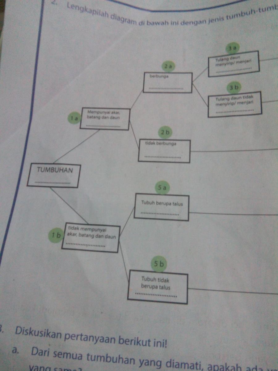 2.lengkapilah diagram di bawah ini dengan jenis tumbuh tumbuhan  tersebut?tolong ya please please - Brainly.co.idBrainly