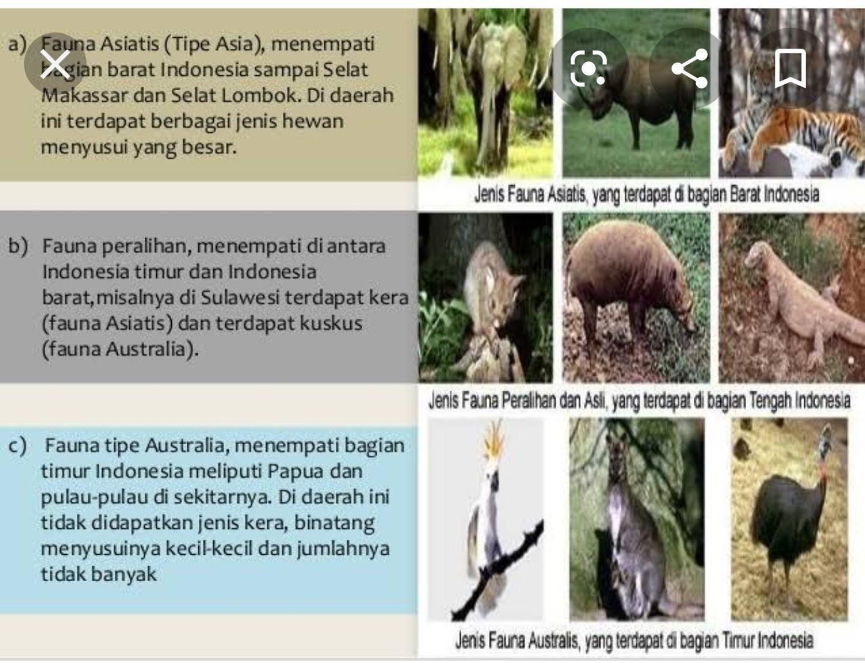860+ Gambar Hewan Australis Di Indonesia HD Terbaru