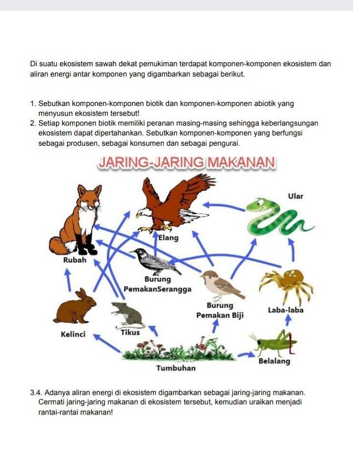 Soal Tentang Ekosistem Kelas 10 Dengan