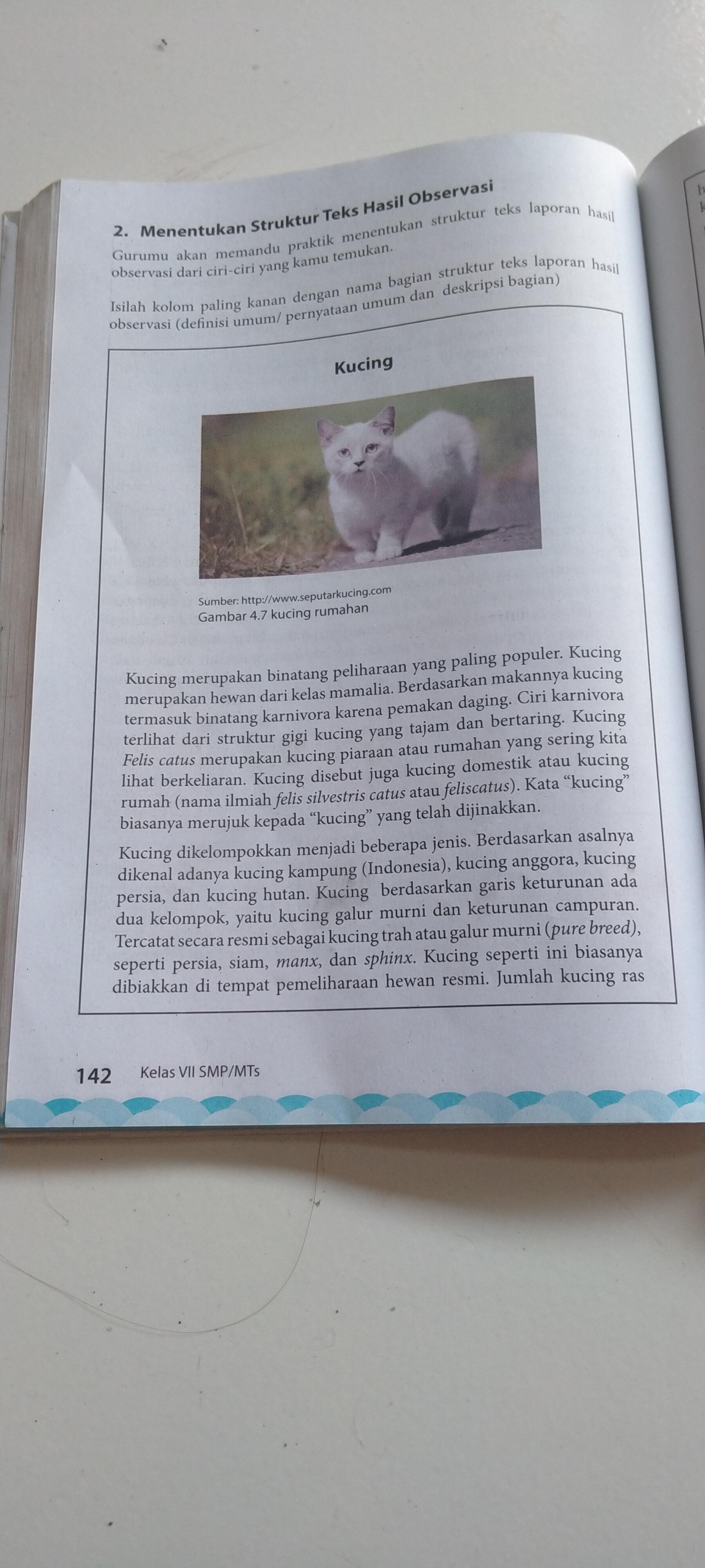 Bacalah Teks Laporan Hasil Observasi Kucing Halaman 142 143 Yang Ada Di Buku Paketmu Bse Brainly Co Id