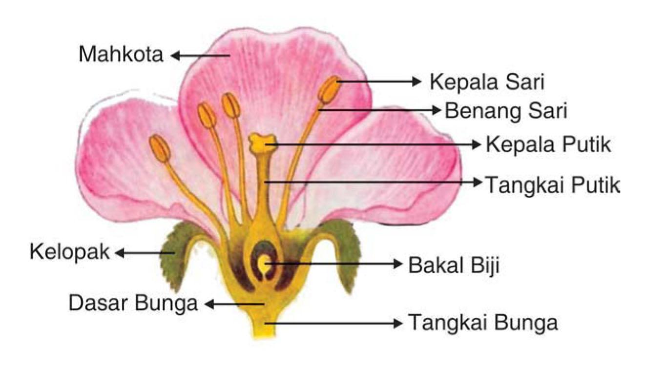 Gambar Bagian Bagian Bunga Dan Cara Penyerbukannya Brainly Co Id