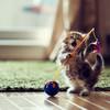 kittyKat07o2