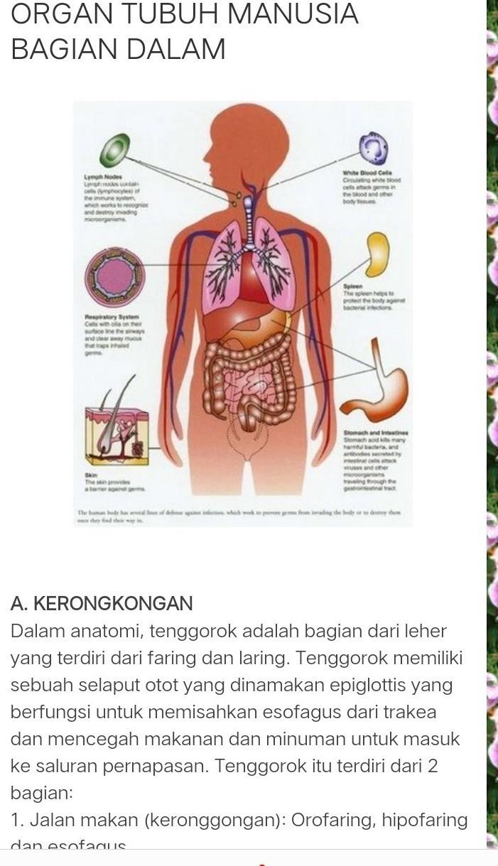 Apa Saja Bagian Organ Manusia Dan Gambarnya Brainly Co Id
