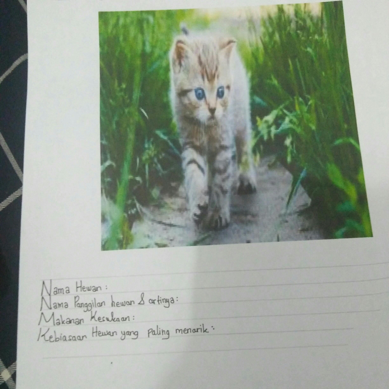 Sebutkan Nama Panggilan Hewan Kucing Dan Artinya Tolong Di Jawabbb Plissss Brainly Co Id