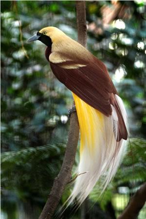 Flora dan fauna Indonesia bagian timur beserta gambar dan