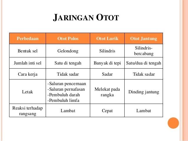 Bandingkan Struktur Otot Polos Otot Lurik Dan Otot Jantung Brainly Co Id