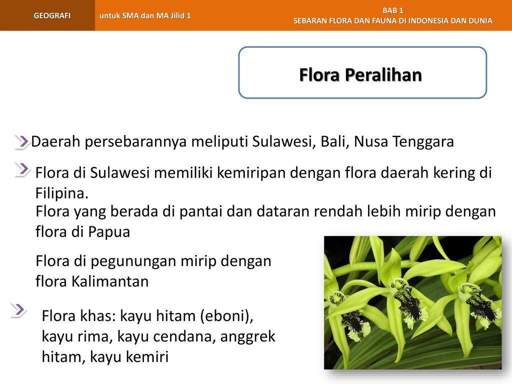 670 Gambar Flora Peralihan Dan Penjelasannya Gratis Terbaik