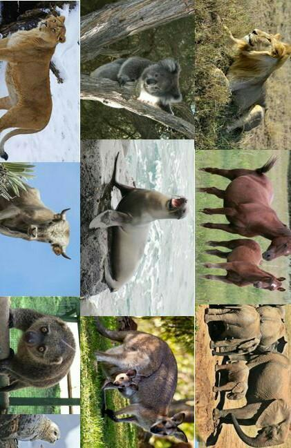 43+ Contoh hewan vertebrata dan invertebrata brainly terbaru