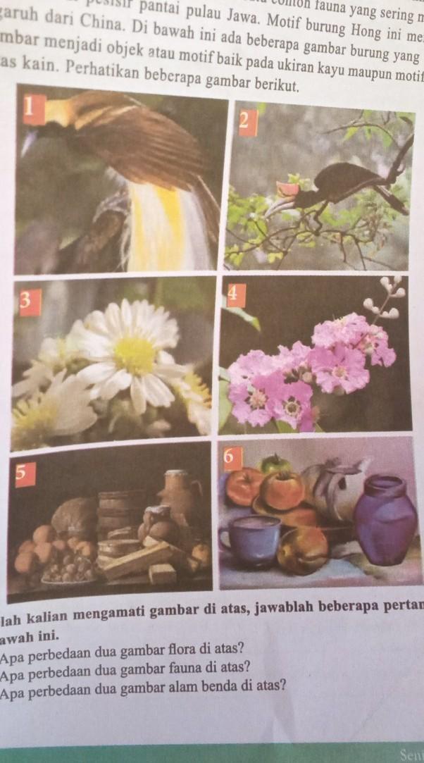 1 Apa Perbedaan Dua Gambar Flora Di Atas 2 Apa Perbedaan Dua Gambar Fauna Di Atas 3 Apa Perbedaan Brainly Co Id