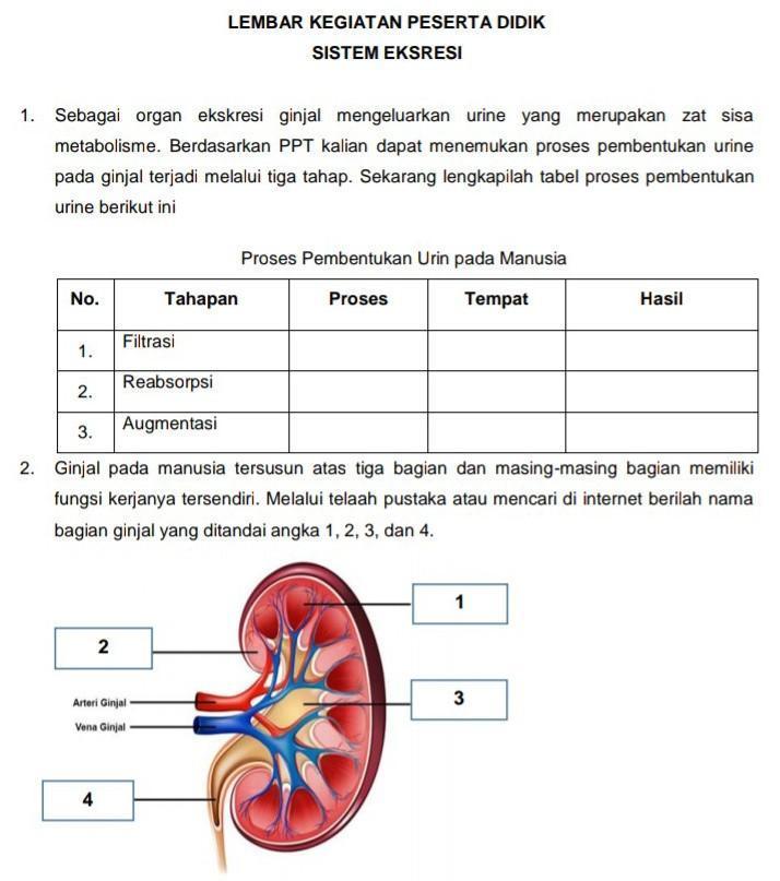16++ Salah satu organ pada manusia yang tidak mengeluarkan zat sisa information