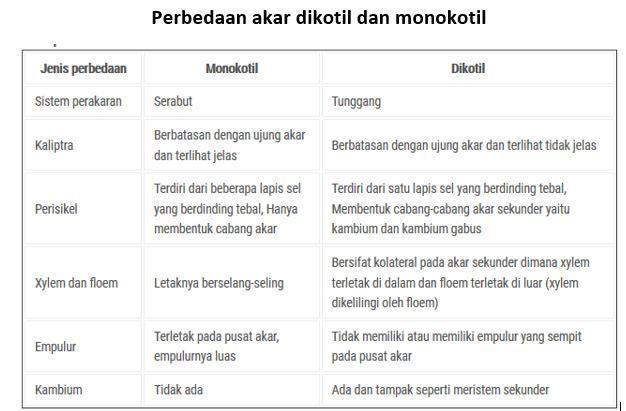 2 Bandingkan Struktur Anatomi Akar Monokotil Dandikotil Monokotildikotilpenyusunepidermis Brainly Co Id