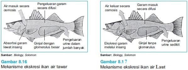 Unduh 550+ Gambar Dan Penjelasan Ikan Air Tawar HD Terbaik
