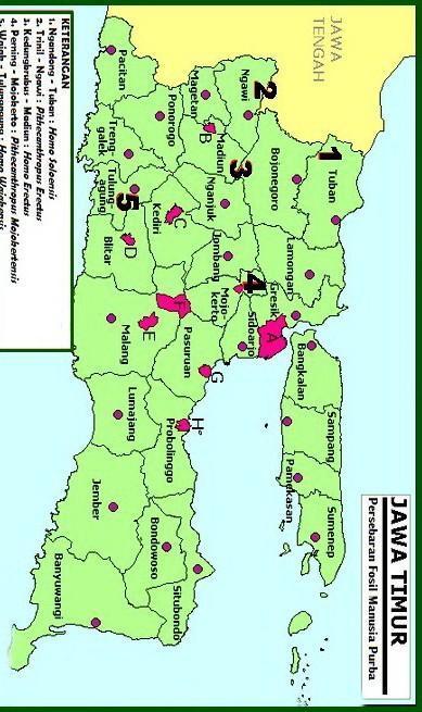 Tolong Beri Gambar Peta Persebaran Manusia Purba Diseluruh Kepulauan Indonesia Brainly Co Id
