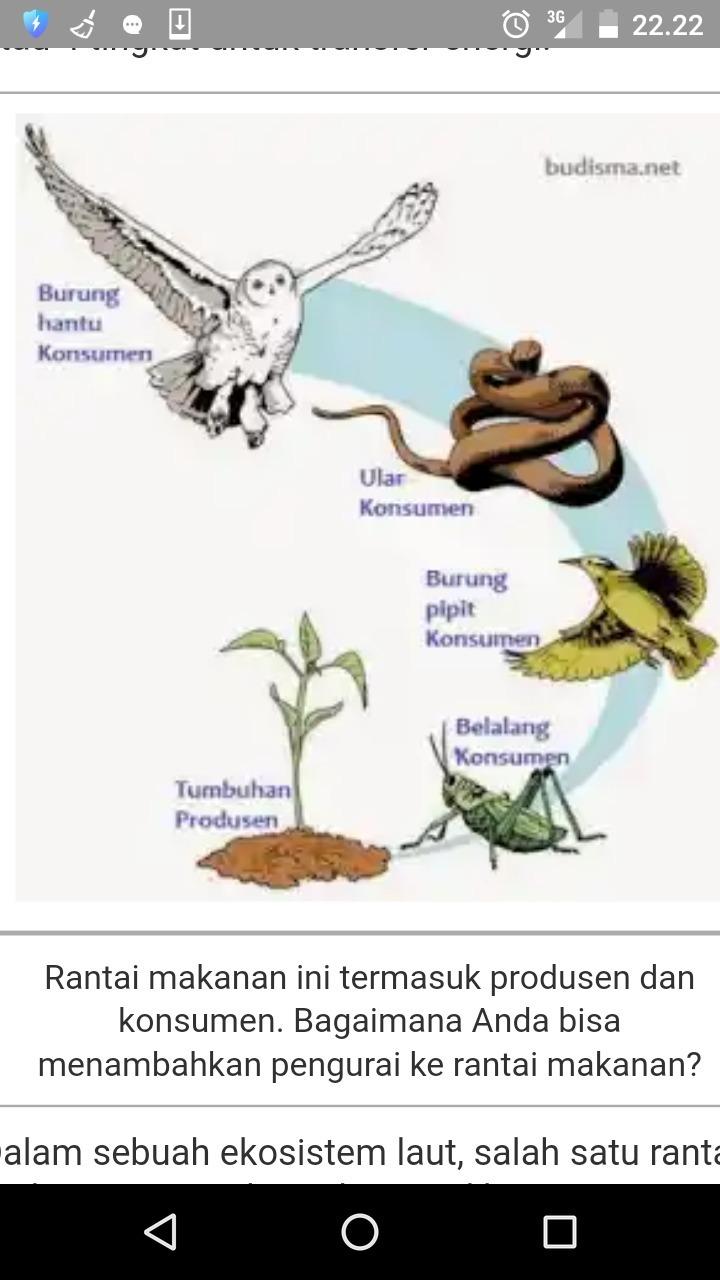 Rantai Makanan Seperti Gambar Diatas Dapat Di Temukan Pada Ekosistem