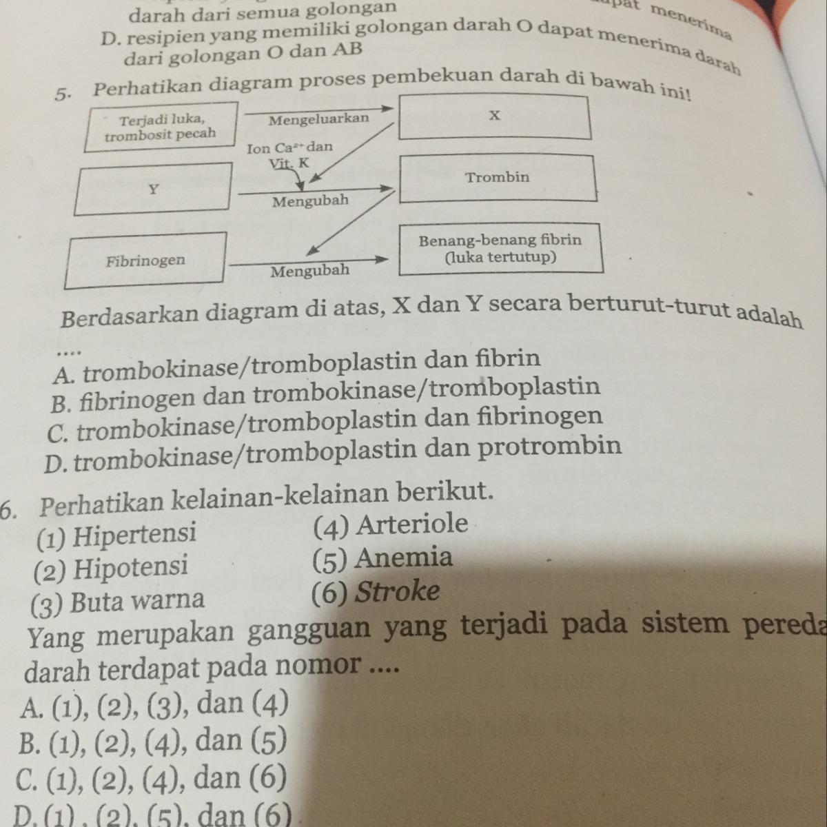 Perhatikan diagram proses pembekuan darah di bawah ini brainly perhatikan diagram proses pembekuan darah di bawah ini ccuart Images