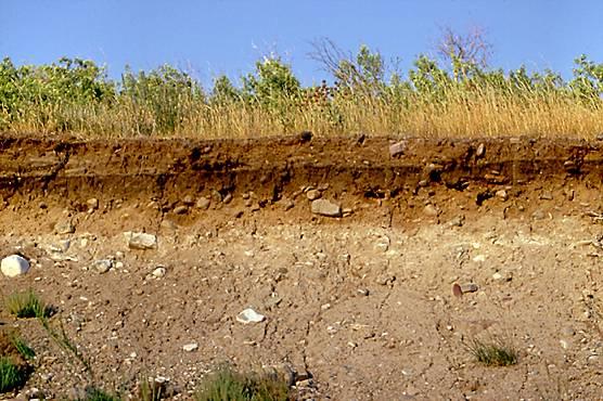 Keuntungan dan cara mengatasi kerugian Investasi Tanah