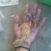 FadhilAji
