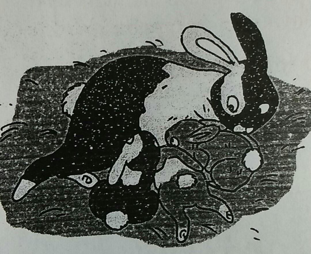 760 Koleksi Gambar Ilustrasi Tentang Hewan Kelinci Mikirbae Terbaru