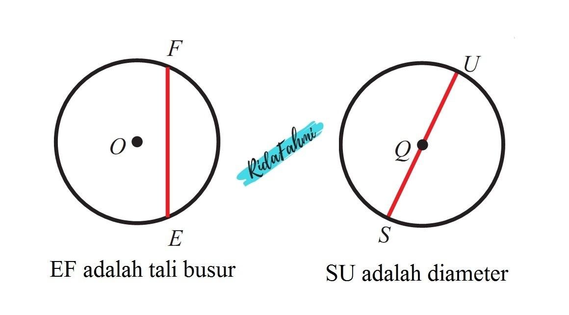 Adakah Tali Busur Yang Lebih Panjang Dari Diameter Jelaskan