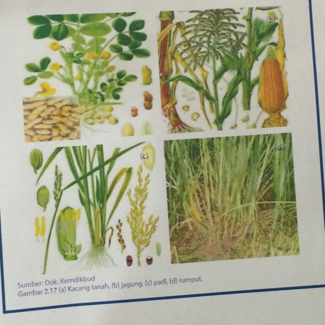 Tentukan 5 Jenis Tumbuhan Yang Akan Kamu Buat Kunci Dikotominya Brainly Co Id