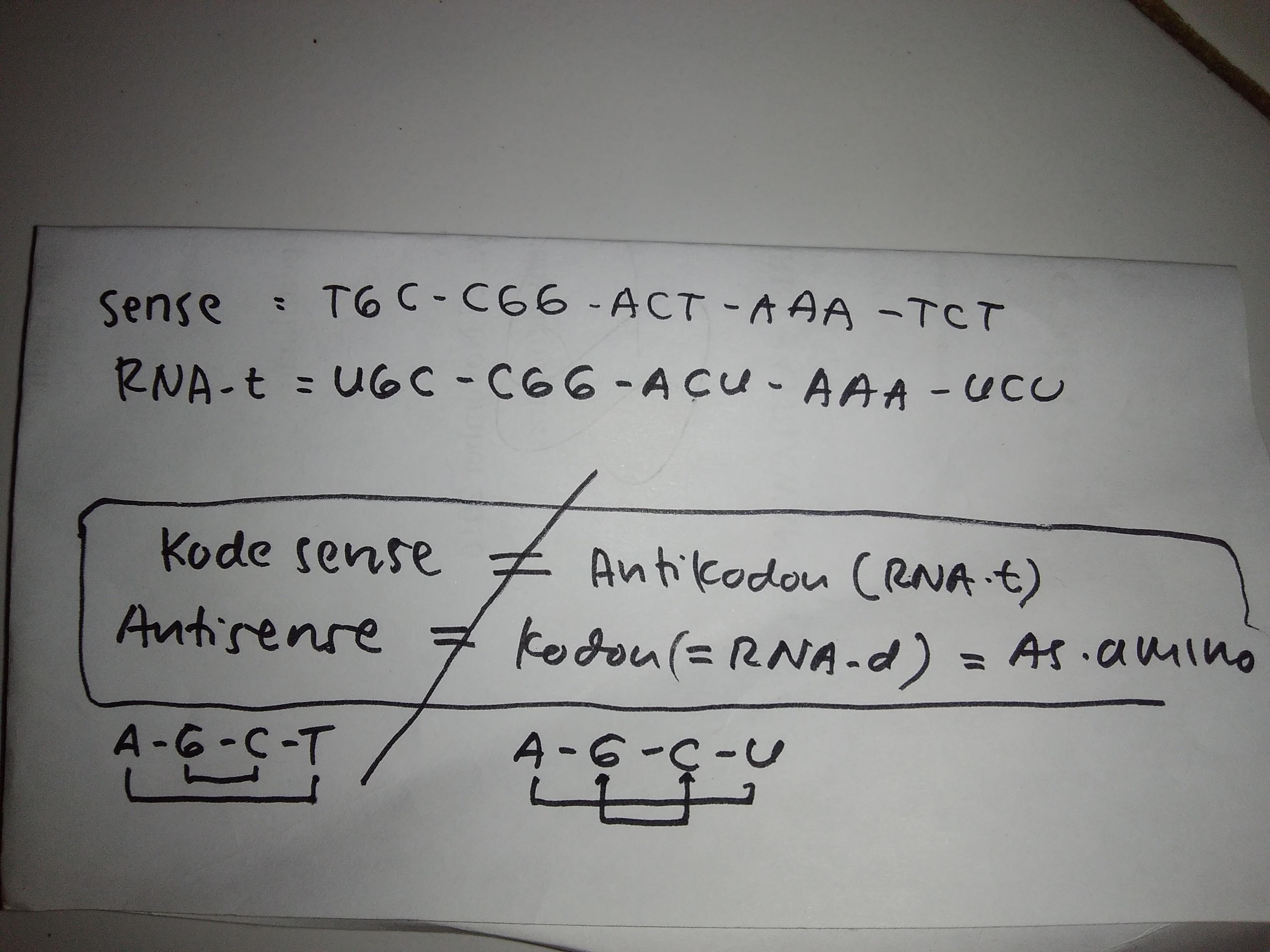 Rantai Dna Sense Mempunyai Kode Basa Nitrogen Sebagai Berikut Tgc