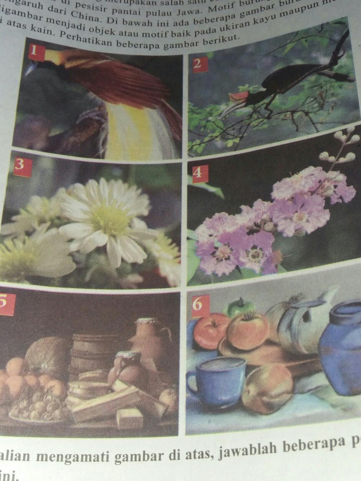 77+ Gambar Hewan Tumbuhan Dan Alam Benda Gratis Terbaru